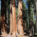 Sequoia summer 2006 - 4